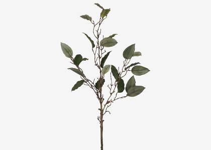 Tige de feuilles Edie