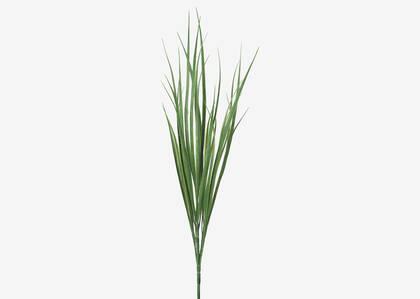 Tige herbes Terrie