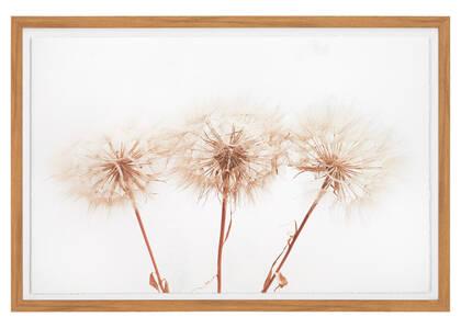 Tableau Dandelions (pissenlits)