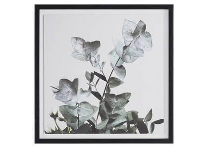 Tableau Eucalyptus 1