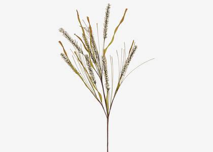 Herbe de blé Brigid
